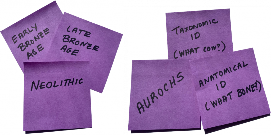 "Purple sticky notes are covered with words like, ""Early Bronze Age"", ""Aurochs"", and ""Anatomical ID, What Bone?""."