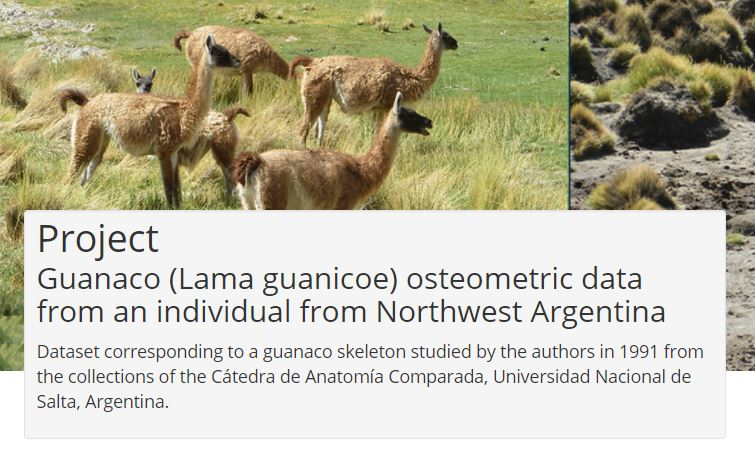 Examples of Guanaco with the project description for the Guanco Project that Eric was Working